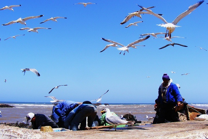 Imperial Cities Tour From/To Agadir